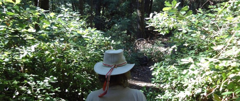 HEALTH EFFECTS OF INTERACTING WITH NATURE
