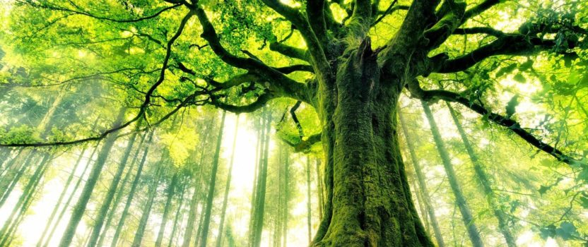 """Lessons From The """"Tree of Life"""" For Our Soul, Society"""